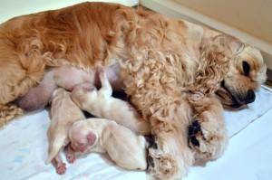 lyric-with-newborn-puppies